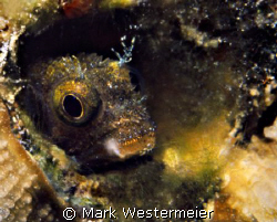 Just Peeking - Image taken in Bonaire with a Nikon F4s, A... by Mark Westermeier