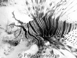 Black & White by Fabio Peracchia