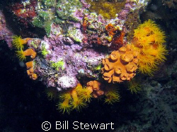"I'm still learning but I belive this is ""Orange Cup Coral... by Bill Stewart"