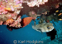 Fish have no concept of up or down by Karl Hodgkins