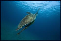 Turtle by Dejan Sarman
