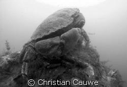 crab&shrimp, oosterschelde, visibility 5Ocm, so black&whi... by Christian Cauwe