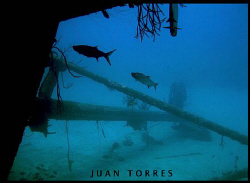 As I was coming out of the Hilma Hooker in Bonaire, I enc... by Juan Torres