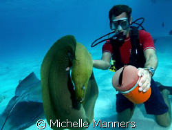 Dive Master of Sunset Divers at Stingray City. The reside... by Michelle Manners