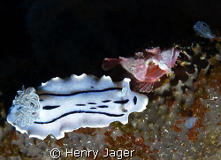 Baby scorpionfish with it's big friend nudi (Olympus E330... by Henry Jager