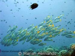 """Im lost"" by Marian Hernando"