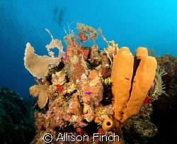Divers at the surface a LONG way away. by Allison Finch