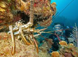 Diver and Lobster by David Heidemann