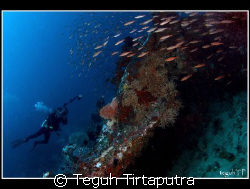 Menjangan Island, west Bali. Taken about 20 meters depth ... by Teguh Tirtaputra
