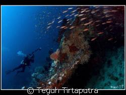 Menjangan Island, west Bali. Taken about 20 meters depth ... by Teguh Tirtaputra