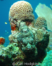 I just love the scopion fish, making hiding an art form by Karl Hodgkins