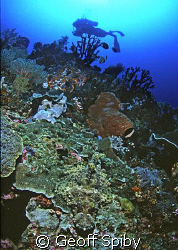 spot the green camouflaged crocodilefish on the reef by Geoff Spiby