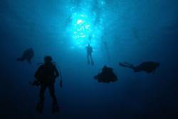 Divers descending on wall dive, Grand Cayman. by David Heidemann