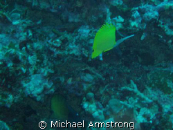 first underwater digital photo by Michael Armstrong