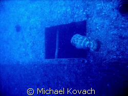 Goliath Grouper entering the wreck of the Spiegel Grove o... by Michael Kovach