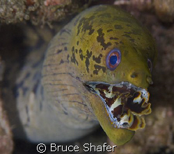 What do you do with a decent moray shot where the white i... by Bruce Shafer