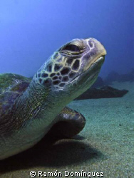 Sea turtle with personality. by Ramón Domínguez