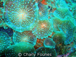 discs - is that soft coral? (more at cf29.com) by Charly Founes