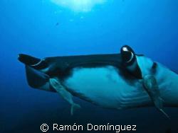 Giant Manta, Revillagigedo archipelago. by Ramón Domínguez