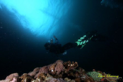 Diver taken photo at Malapascua  by Taco Cheung