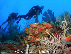 israel at the wall!!!!! in the v.j.levels dive site at pa... by Victor J. Lasanta