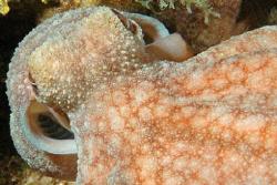 Octopus. by David Heidemann