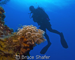 The founder of SingleDivers.com drifting past a bouquet o... by Bruce Shafer