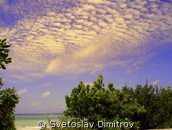 Real tropic pleasure by Svetoslav Dimitrov