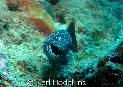 Even Moray's have a bit of a laugh by Karl Hodgkins