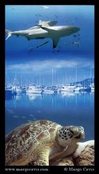 Sea turtle & sharks by Margo Cavis