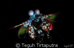 Capture this mantis shrimp inside the crevices... by Teguh Tirtaputra