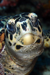 Turtle. by Dray Van Beeck