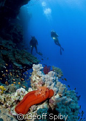 a Spanish Dancer on the wall at Elphinstone Reef Nikon D... by Geoff Spiby