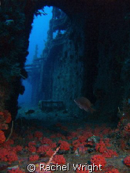 Captain Dan Wreck off Fort Lauderdale by Rachel Wright