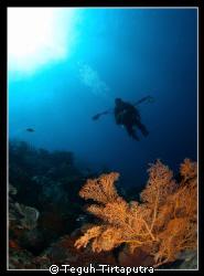Taken at Menjangan Island, West Bali... by Teguh Tirtaputra