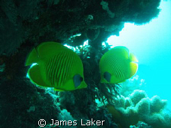 LOVE (WAS USING A RED FILTER ON THIS DIVE) by James Laker