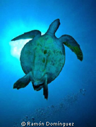 Sea turtle Silhouette. Sea of Cortéz. by Ramón Domínguez