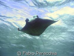 To fly by Fabio Peracchia