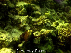 Octopus by Harvey Reeve