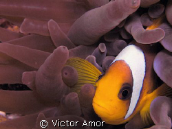 Nemo by Victor Amor