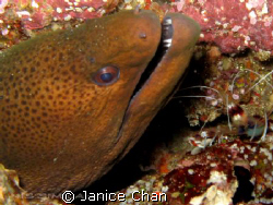 Come out and brush your teeth... don't be shy Similan ph... by Janice Chan