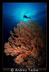 SEA FAN by Andrey Tazba