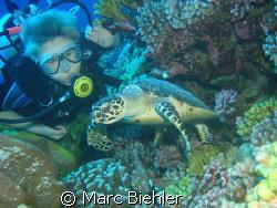 Meet a turtle, Bora Bora sony cybershot T5 by Marc Biehler