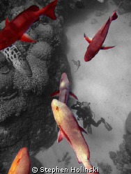 Black, White, and....Red!  Photoshopped.  Natural Light p... by Stephen Holinski