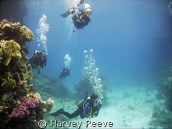 leisurely dive by Harvey Reeve