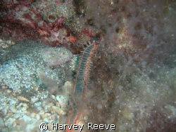 fireworm by Harvey Reeve