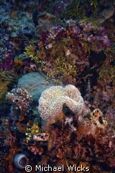 coral, anemone by Michael Wicks