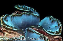 Giant clam taken in Nabq Park with E300 and 50mm lens. by Nikki Van Veelen