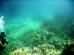 101.102.103.104.105.dam 1.2.3.4.5,,,,, by Harvey Reeve