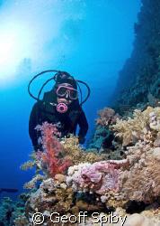 Lyn eyeing a scorpionfish by Geoff Spiby